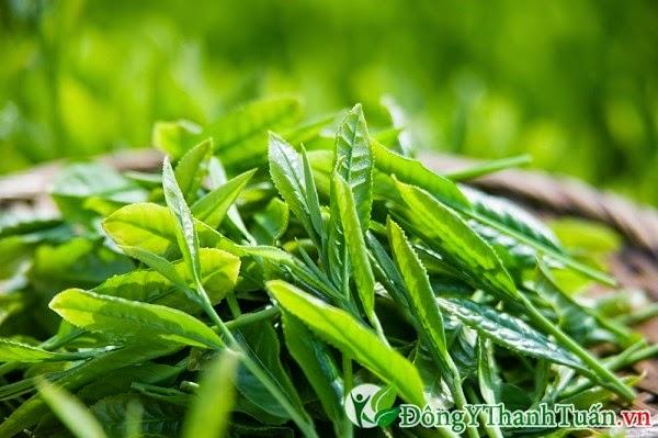 Trà xanh là thuốc chữa đau răng từ thiên nhiên