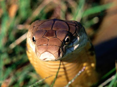 Top 10 Most Poisonous Venomous Animals On Earth