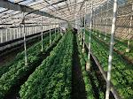 Azienda agricola Agriturismo Signola