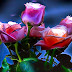 Lovely 3D Colorful Roses images