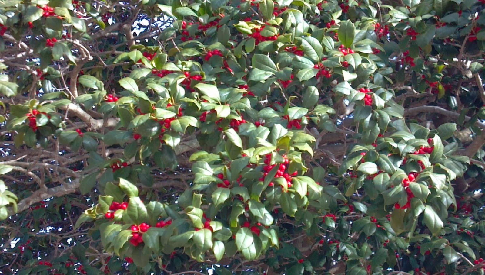 100 fruit trees in nj espalier gardens fruit trees and gard