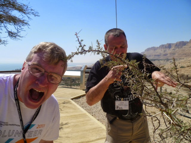 Crown of Thorns Bush