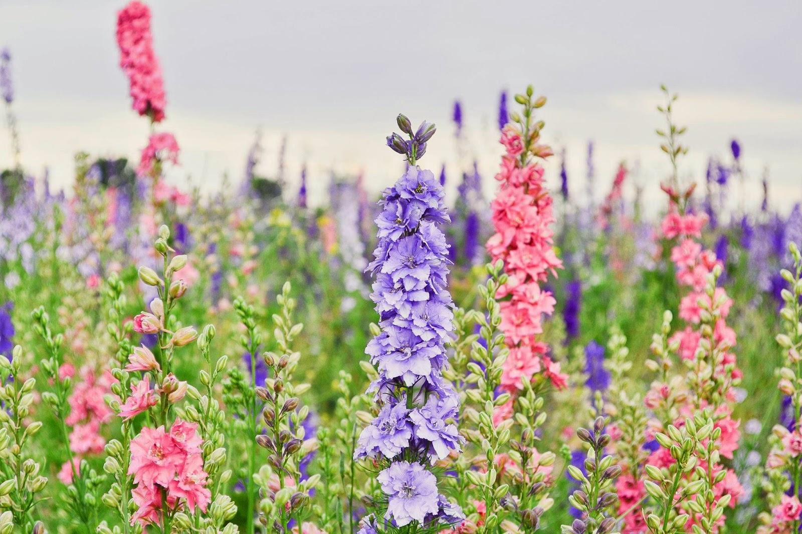 The Confetti Blog The Real Flower Petal Confetti pany s Delphinium Fl