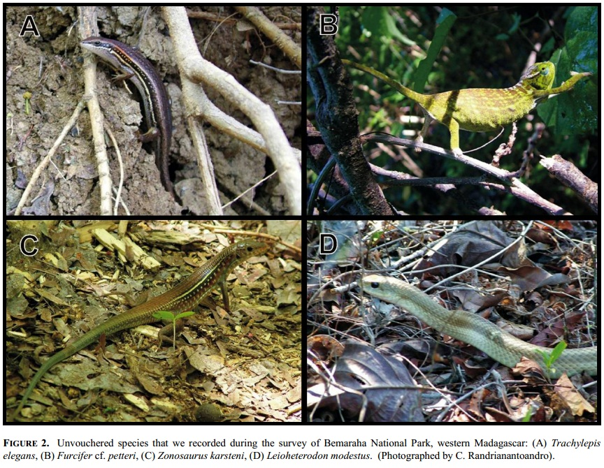 Species New to Science: [Herpetology • 2010] Amphibians ...
