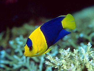 Viva las vegas septiembre 2012 for Lista de peces tropicales para acuarios