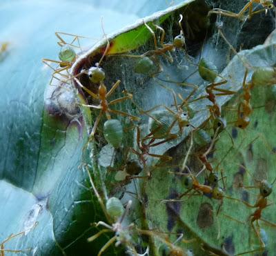 مستعمرات النمل-عجائب النمل-صور للنمل-أنفاق النمل