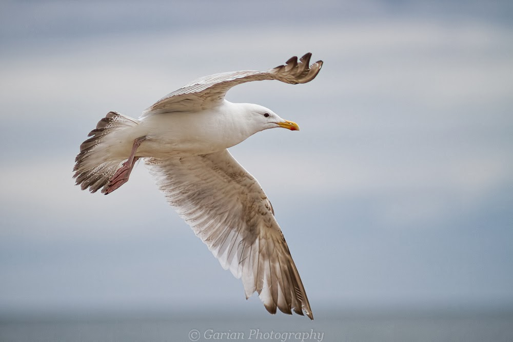 tips to manually focus birds in flight