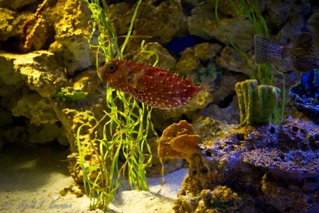 Eye Of The Big Dog Newport Aquarium Kentucky