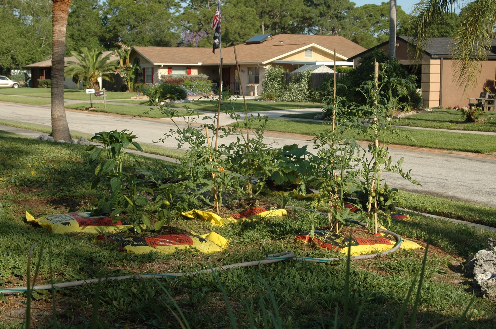 4 the luv of our front yard garden a work in progress rh homeharvests blogspot com