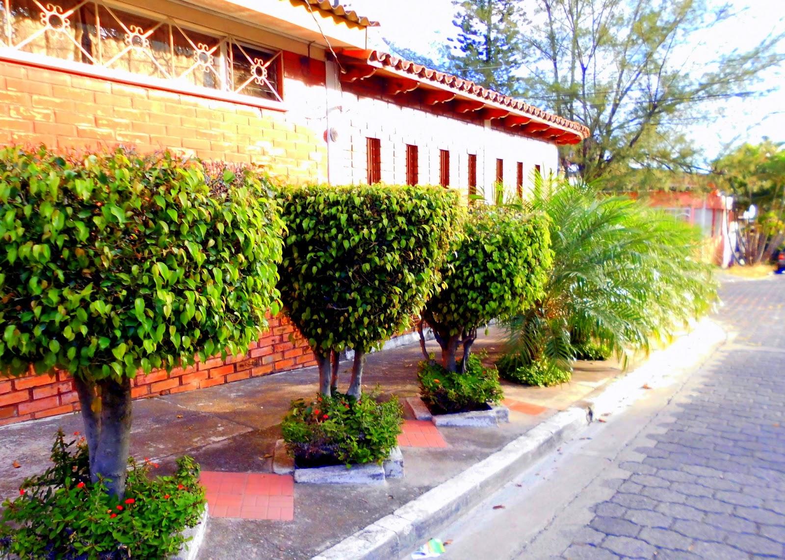 arbustos de ficus, plantas, árboles, flores, calle