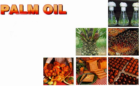 MCX crude palm oil, Agri Commodity Tips, free agri calls, Future Trading Tips