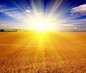 There is No New Thing Under the Sun - Bright Sun Over Wheat Field
