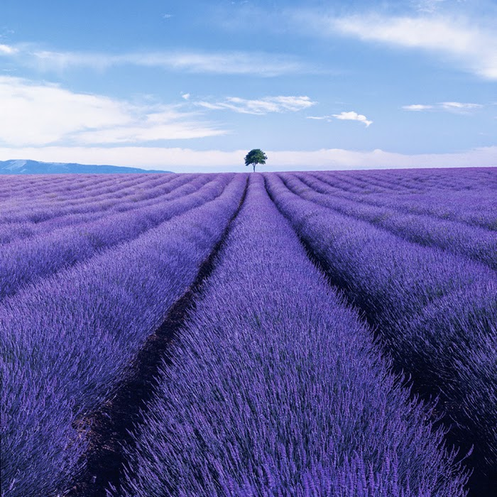 photo travel inspiration - lavender field, France