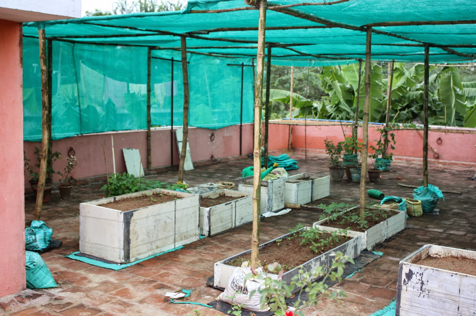 TERRACE GARDENING My Green House