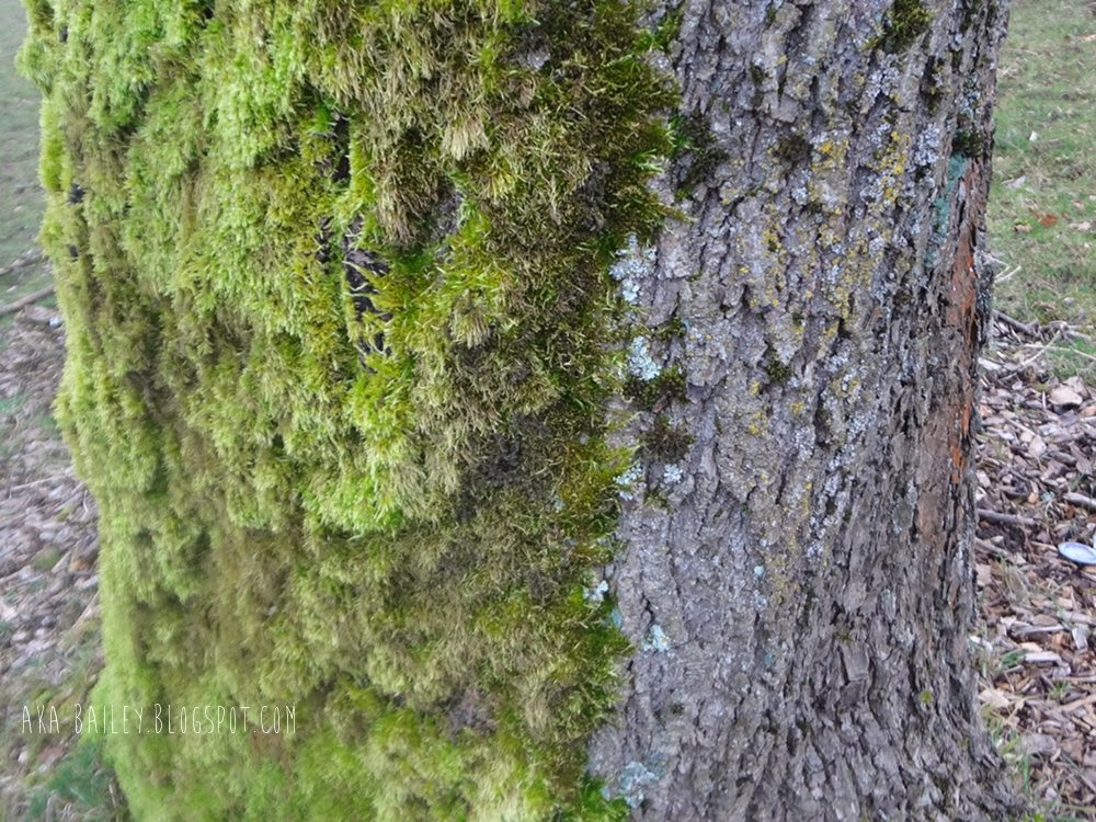 A tree that's covered in moss on one side