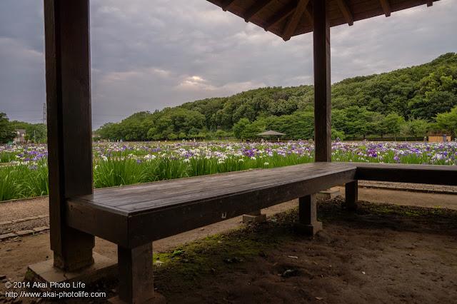 花菖蒲園の写真