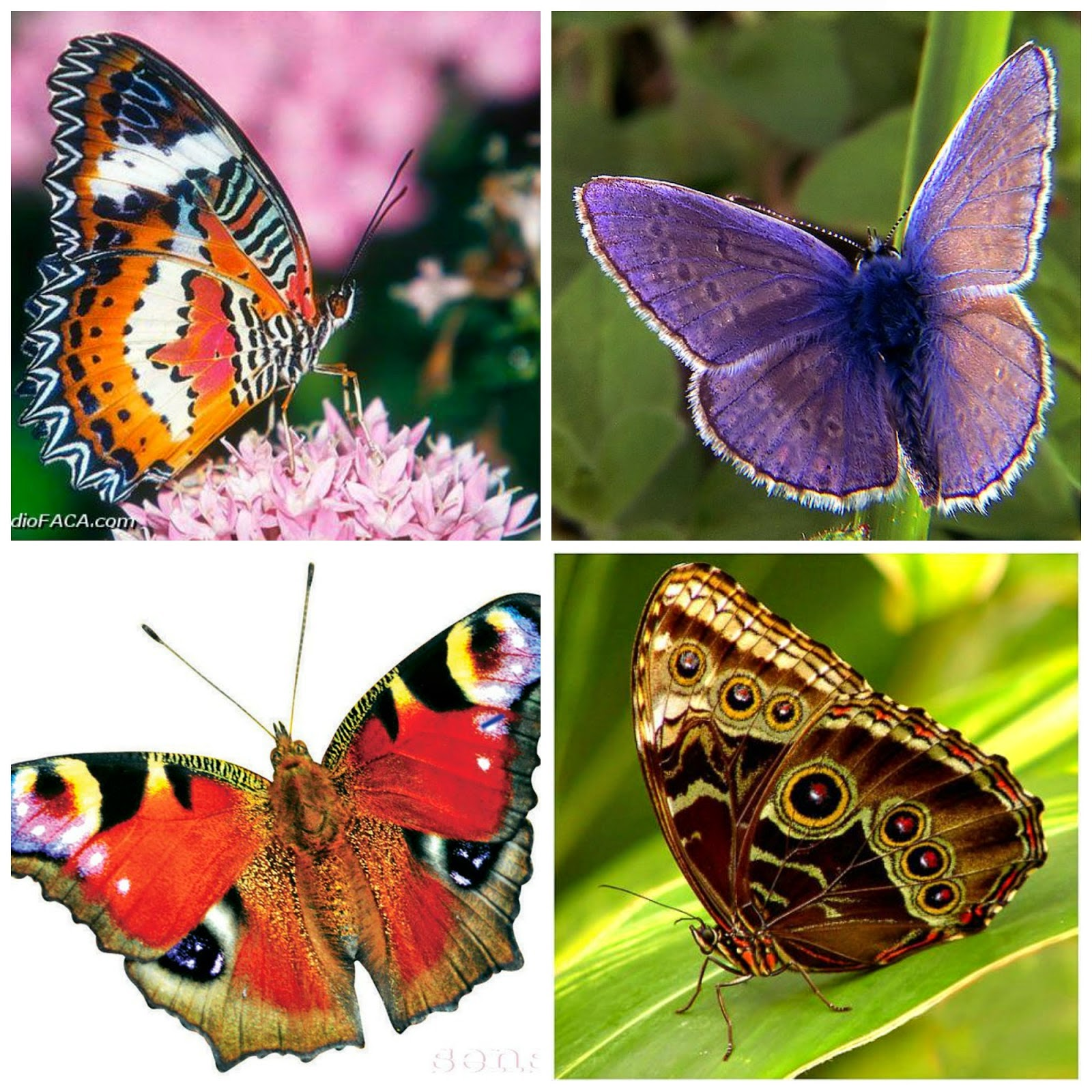 Butterflies Blog Hop em 2015-04-11