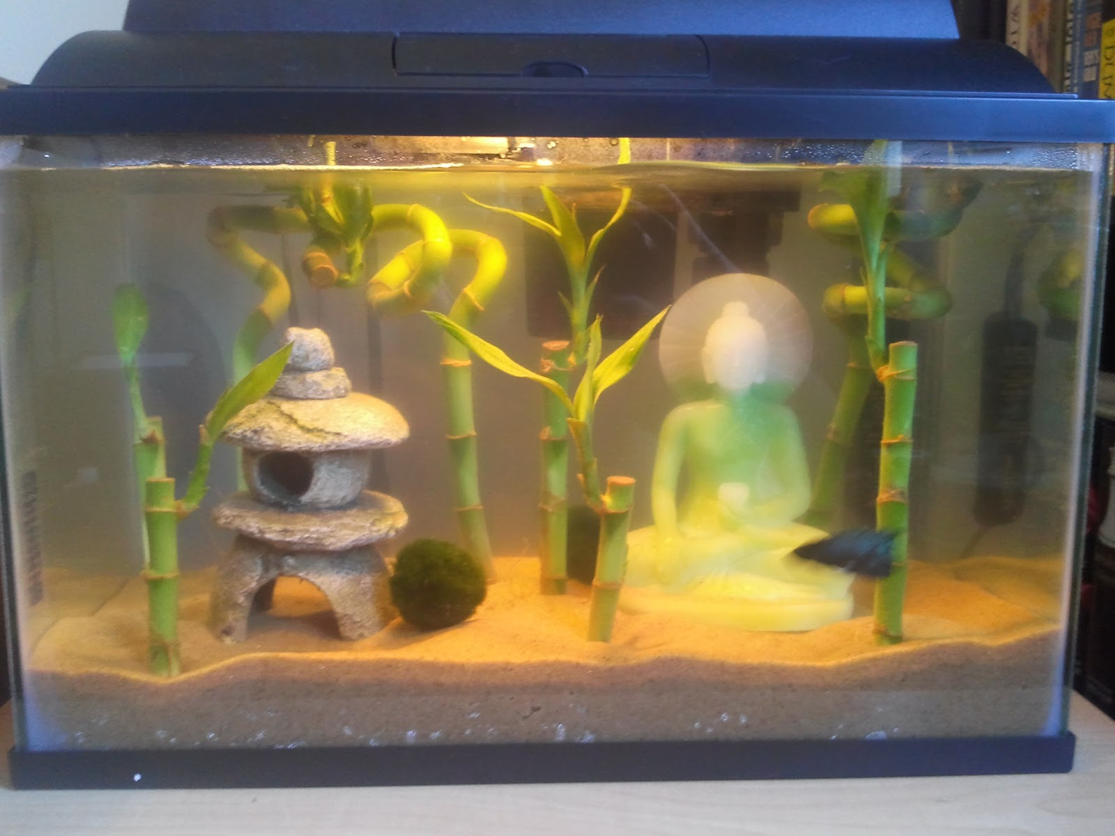 5 gallon fish tank how big how big is a 5 gallon fish for Fish for 2 gallon tank