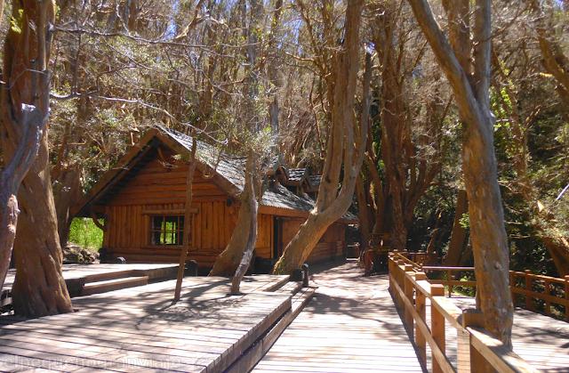 Bosque, Arrayanes, Villa la Angostura,casa, te, arboles