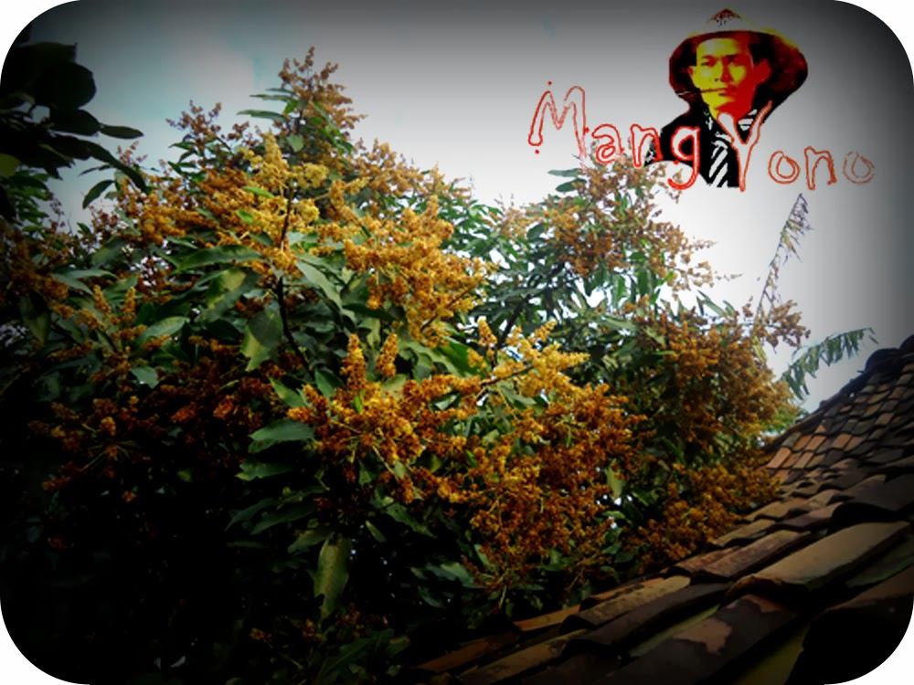 Bunga Mangga keluar bukan pada waktunya - Blog Mang Yono