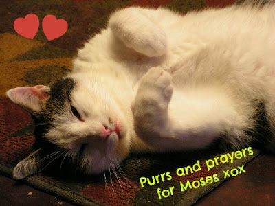 Moses Needs Yours Purrs and Purrayers