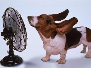 basset hound cooling