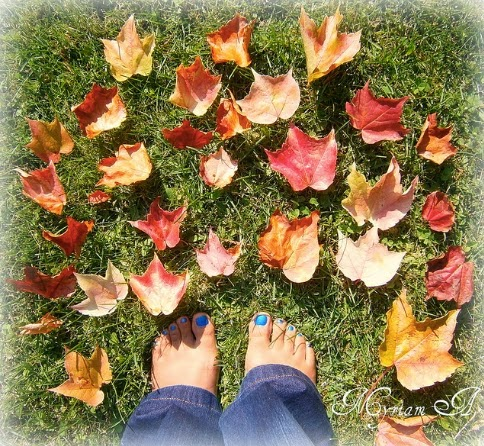 VipandSmart otoño soleado