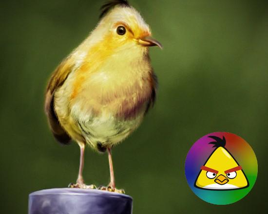 angry birds dalam dunia nyata