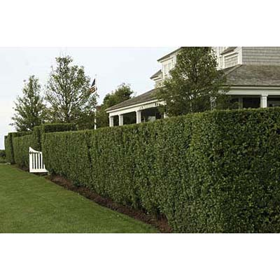 Imperial services 10 ways to add privacy to your yard 1 2 for Privacy from neighbors ideas