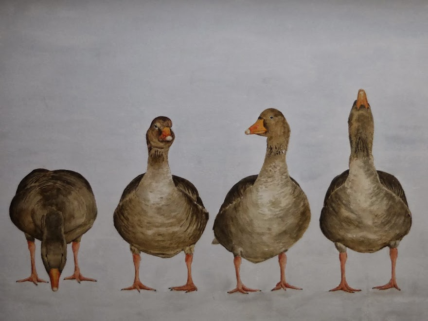 Kwartet grauwe ganzen
