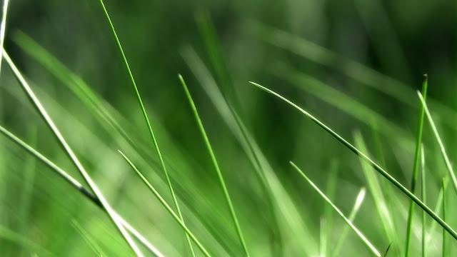 Grass Nature HD Wallpaper