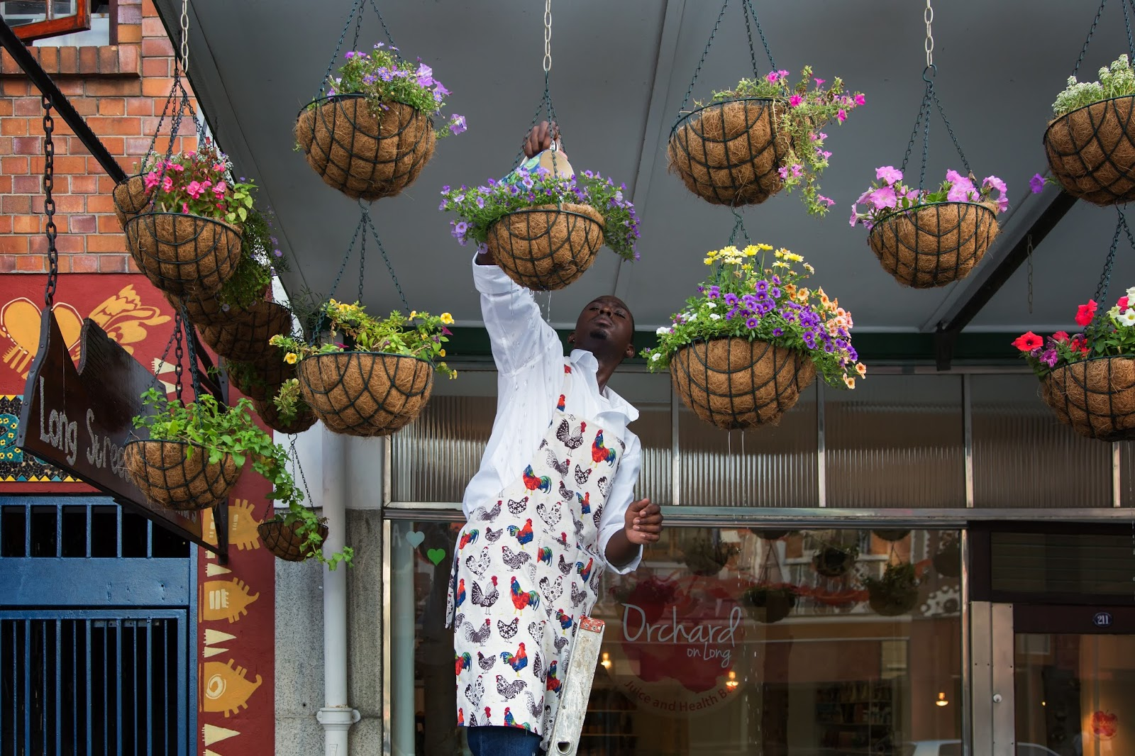 A street photograph of a man watering some hanging flower baskets.
