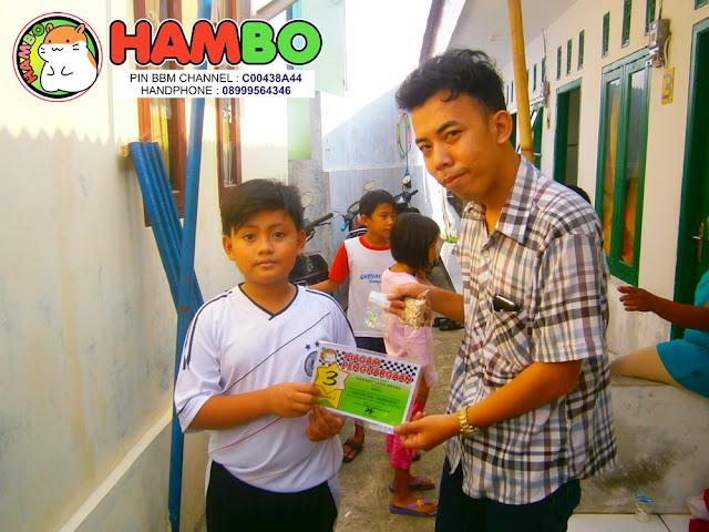 Hamster Ball Tournament HAMBO