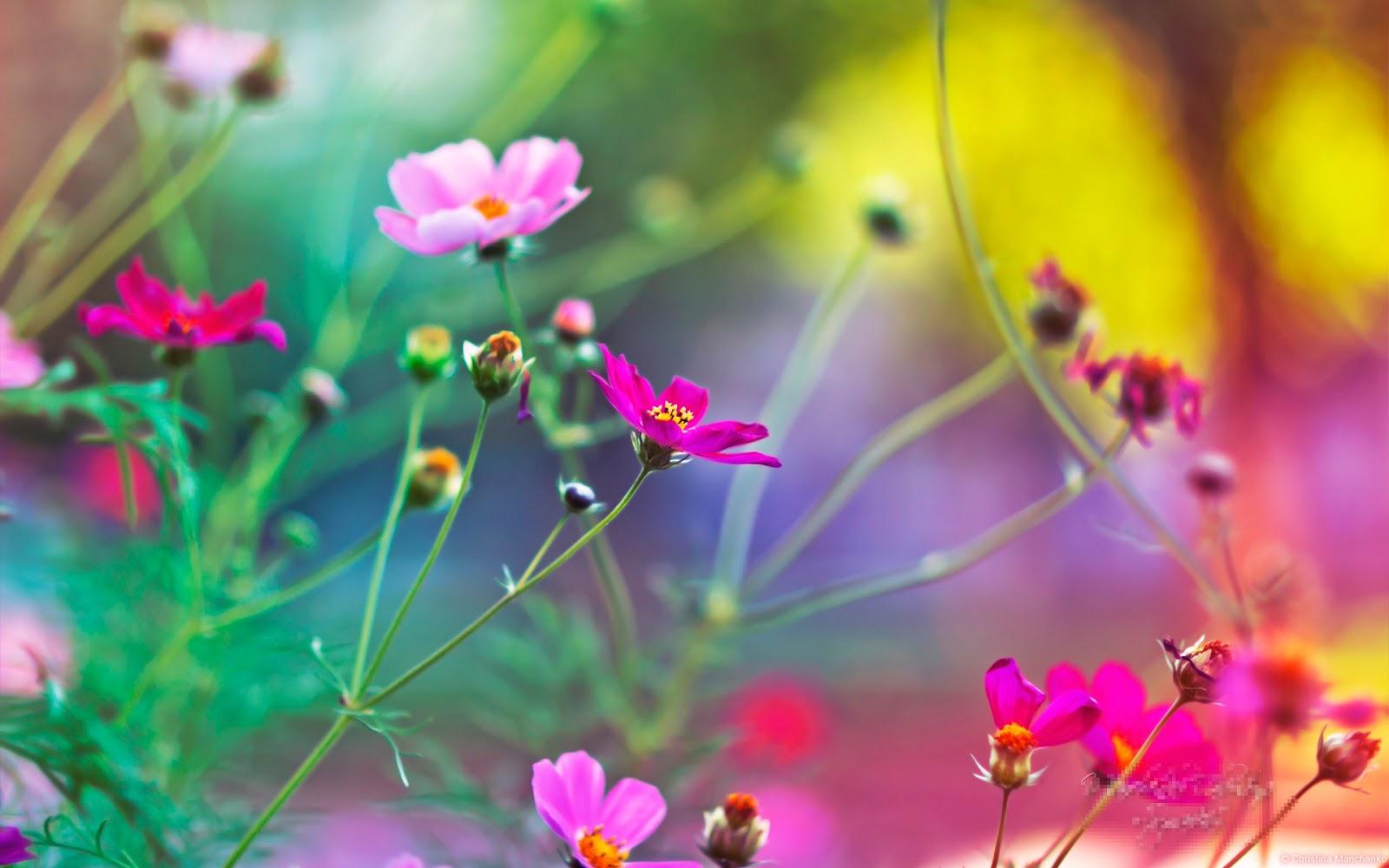 Imagenes De Flores Para Funeral - imágenes de flores de Bach para descargar Imágenes de