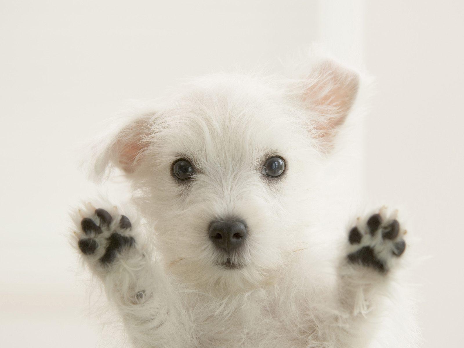 http://2.bp.blogspot.com/-gEpS9Vmml0E/T2A3kKEz6uI/AAAAAAAACxQ/j6sPNeNrLSs/s1600/cute-puppies-wallpapers-07.jpg