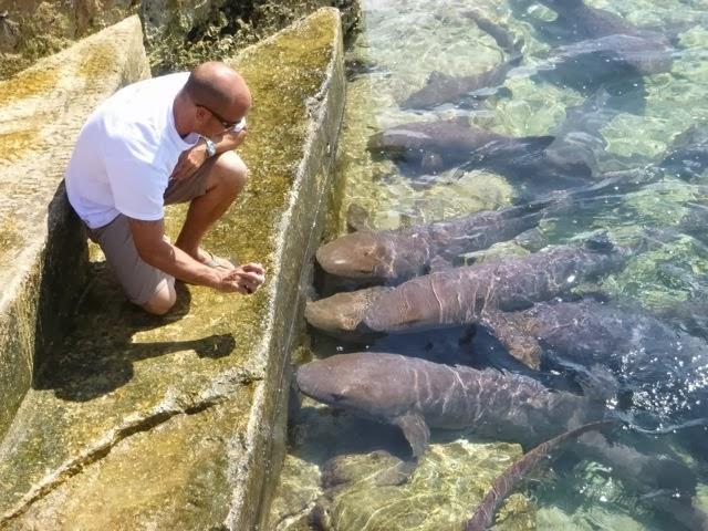 gopro bahamian wildlife photo