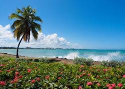 ALONG OUR BEACH