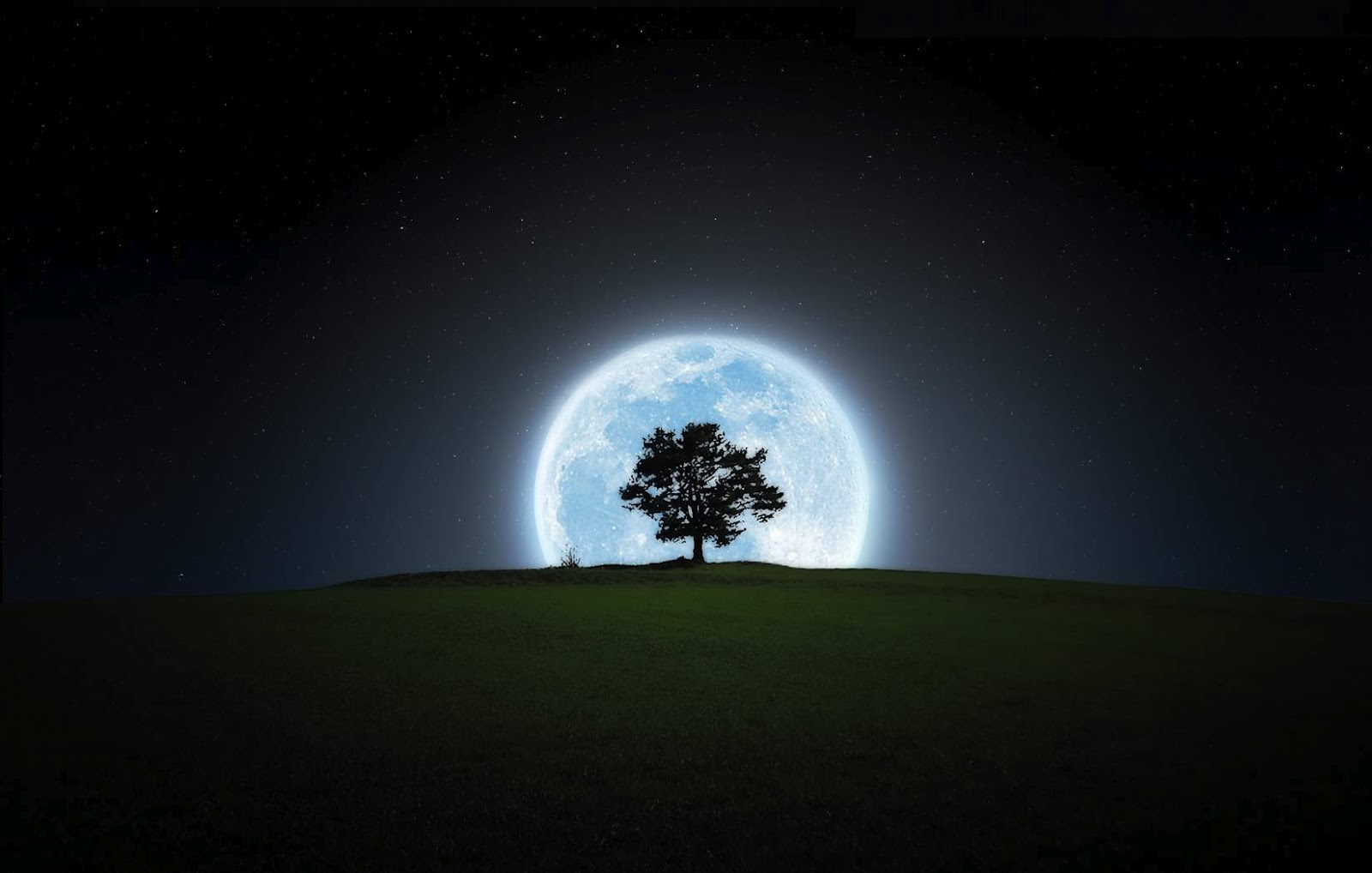 black and white wallpapers full moon and tree wallpaper