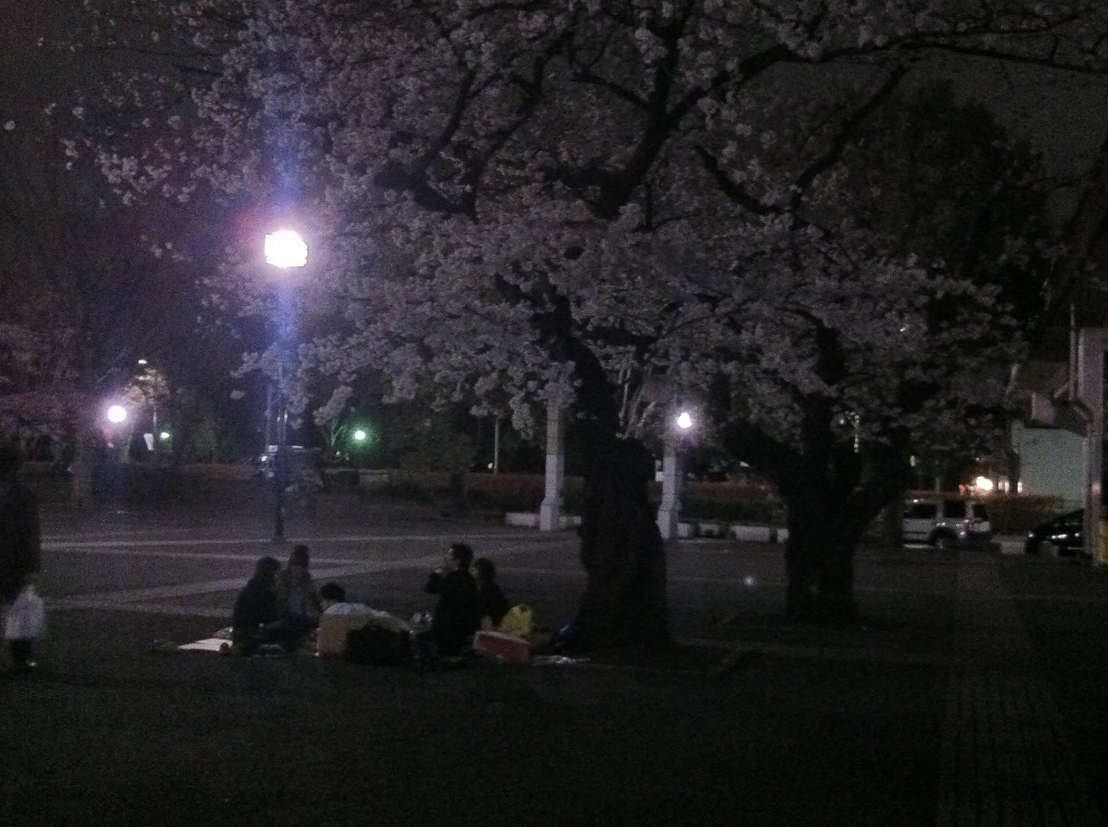 Partying under the yozakura, Yoyogi Park, Tokyo.