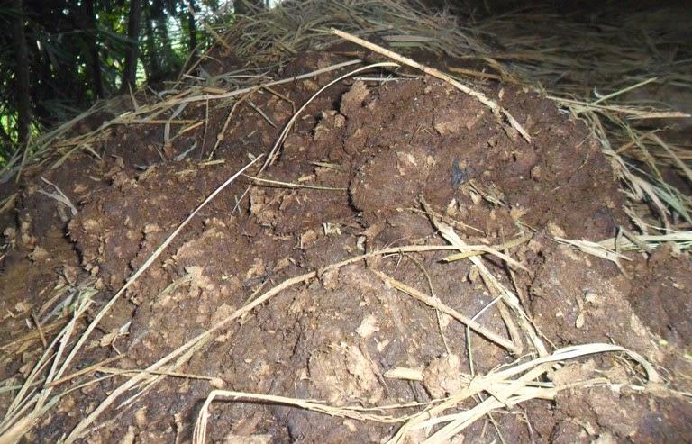 Cara Membuat Bokahsi Pupuk Kandang Campuran Arang dan Tanah