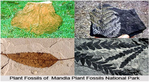 Plants of Mandla Fossil National Park