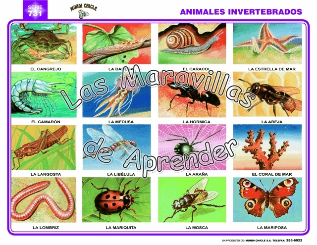 Nombre animales invertebrados - Imagui