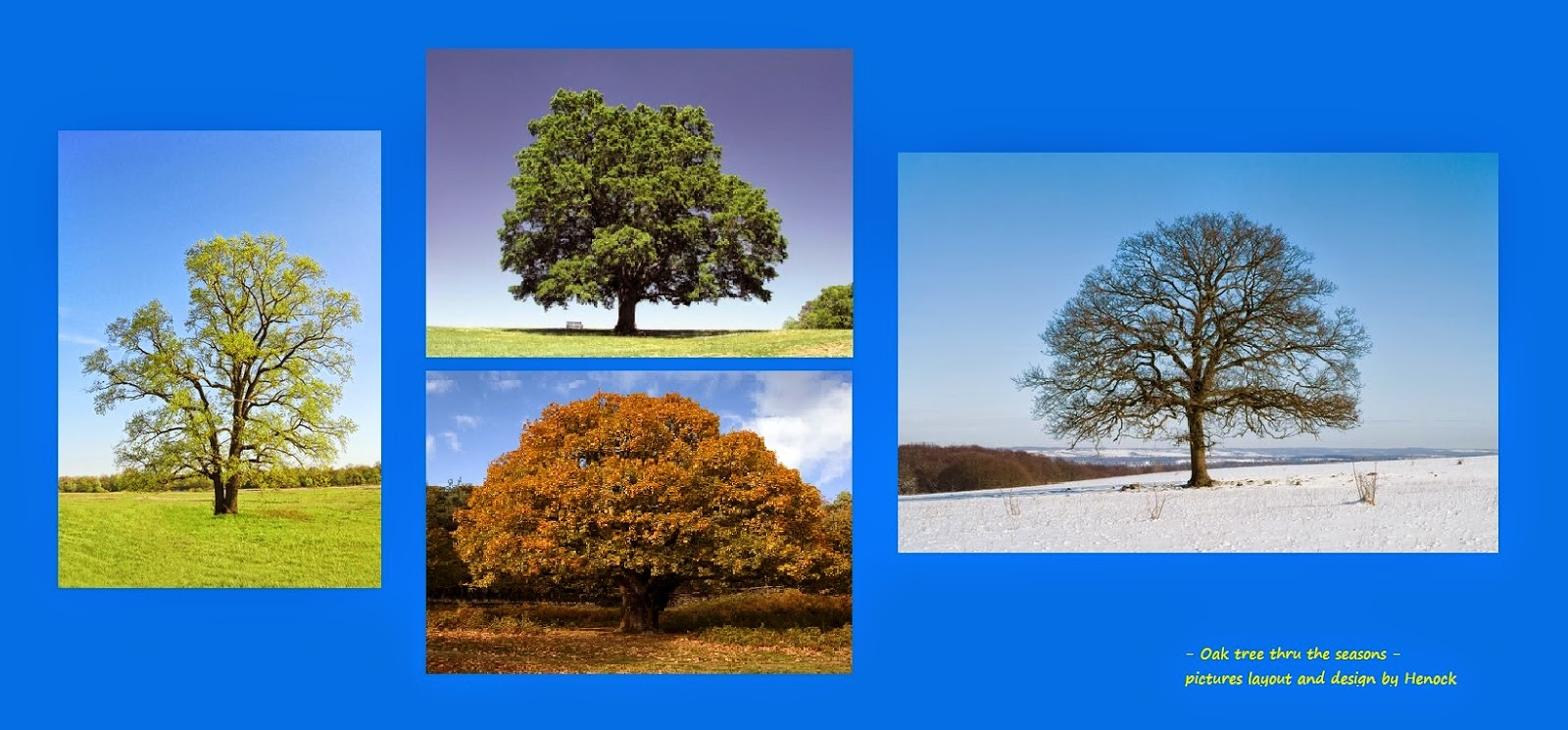 the oak tree thru the seasons