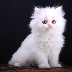 Gambar Kucing Yang Comel Foto Bugil Bokep 2017