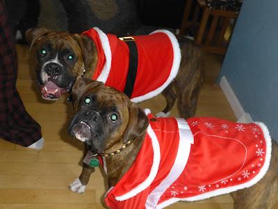 christmas, santa, mrs claus, holiday, dress up, boxer