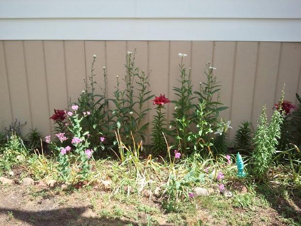 gardening in boroughs of nyc