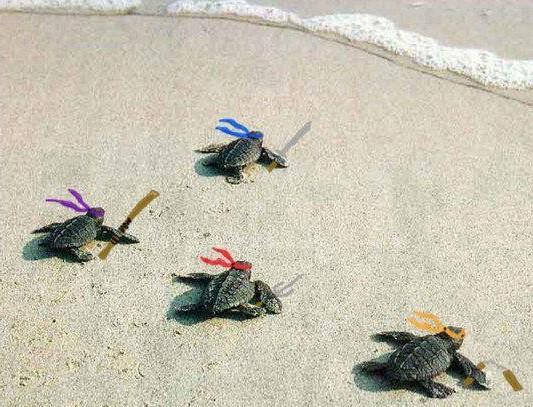 ninja-turtles.jpg