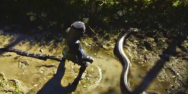 rela ditelan ular anakonda