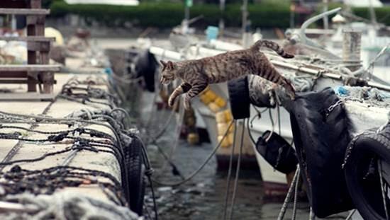 kucing-melompat