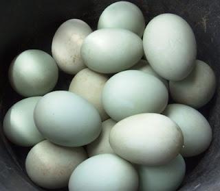 Peluang Bisnis Telur Asin
